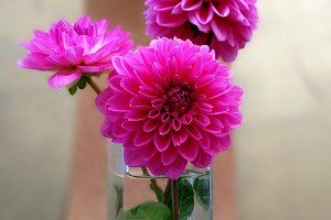 Three pink dahlias bouquet