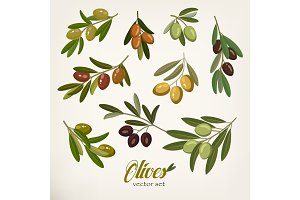Olive branches with foliage and berries