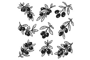 Set of isolated hand drawn sketches of olive oil