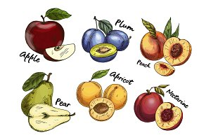 Sketches of apple and pear, plum, apricot fruits