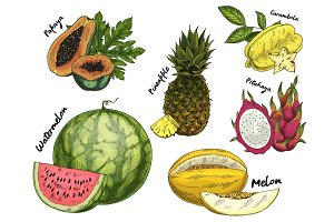 Set of isolated sketch of tropical fruits
