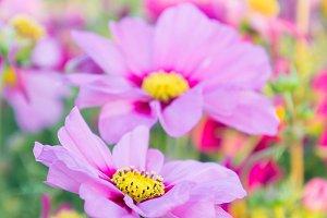 Pink flowers nature garden