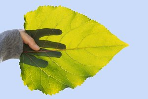 autumn leaf and hand
