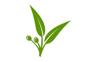 Eucalyptus Green Leaves Icon