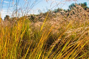 Wild field of grass, sun on blue sky