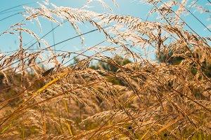 Wild field of grass, sun on blue sky