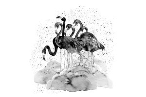 Watercolor Flamingos With Splash