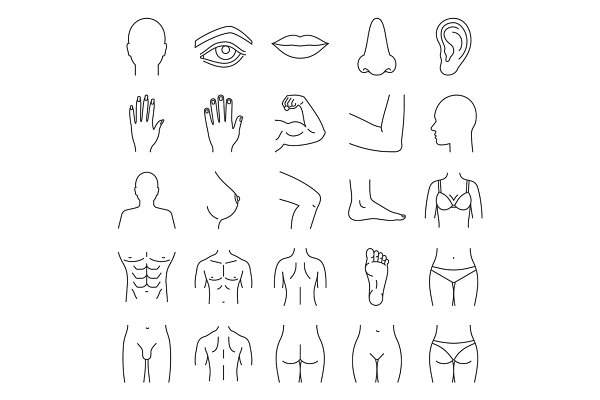 Human body parts linear icons set