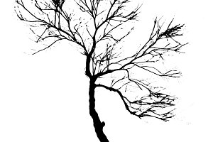Isolated Tree Graphic Silhouette