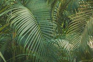 Palm garden background