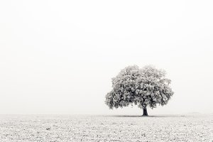 Lonely and cold tree