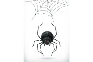 Spider. Happy Halloween. Vector