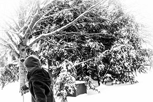 BW Snow