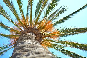 Palm Tree from below