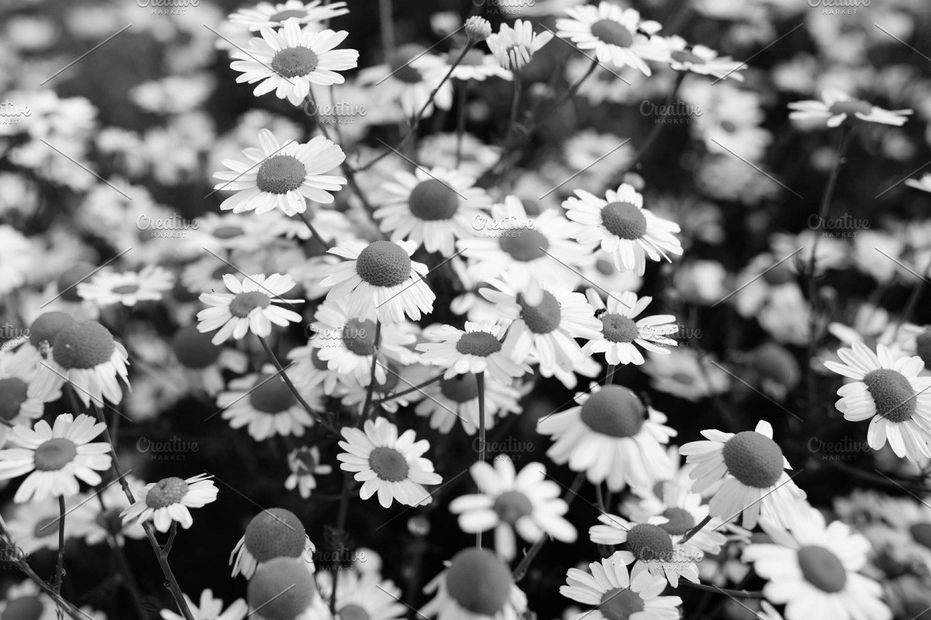 Save black and white flowers