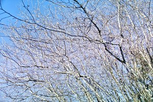 Twigs of Trees in Winter Forest