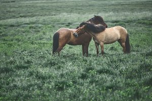 couple horses in a field