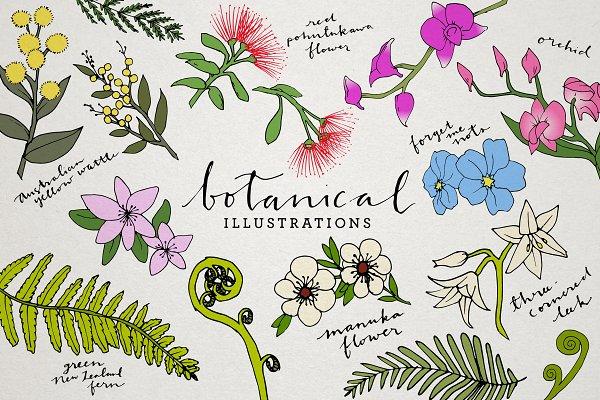 Botanical & Floral Illustration Pac…