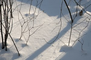 Bush branches and snow