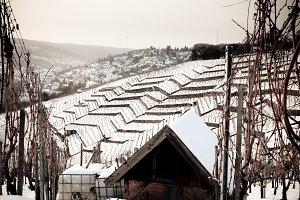 Snowy Vineyard, Stuttgart, Germany
