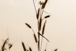 Flower of grass.