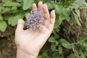 Hand of a woman touching some lilac