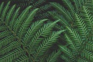 Green Forest Ferns