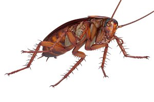 Cockroach bug creature