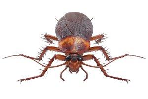 Cockroach bug roach