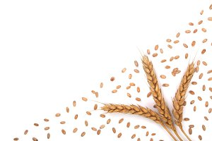 grain and ears of wheat isolated on white background with copy space for your text. Top view
