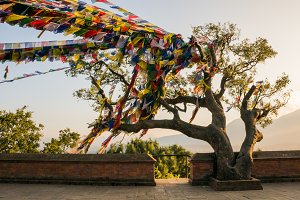 Tree with prayer flags
