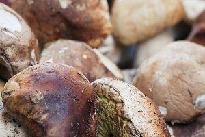 Close-up of fresh Boletus mushrooms