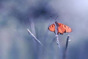 butterfly, macro, insect, nature,