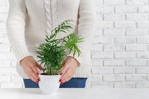 holding plant in flower pot