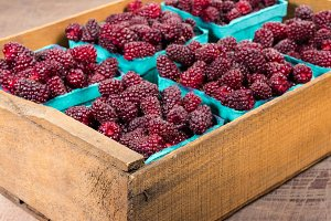 Fresh Tayberries in boxes
