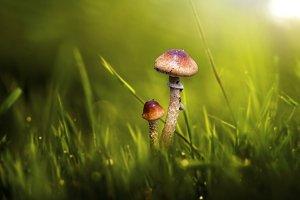 mushroom, macro, nature,