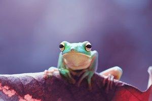 frog, animal, mammal,
