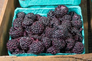 Black raspberries in boxes