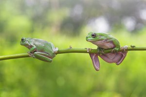 frog friedship