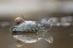 turtle and snail,