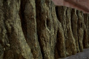 Textures - Tree Bark