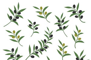 Olive branch set vector illustration