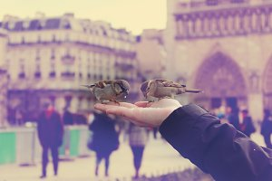 Feeding birds in front of Notre Dame