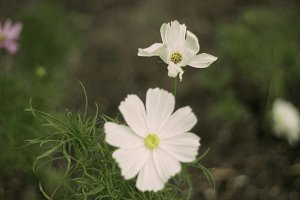 Tiny white flowers nature photos creative market little white flower mightylinksfo