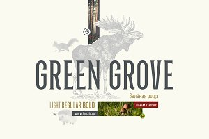 Green Grove // 3 fonts