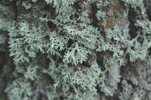 Moss on tree trunk