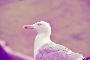 Seagull Closeup Shot