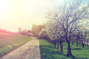 Path in a spring Landcape