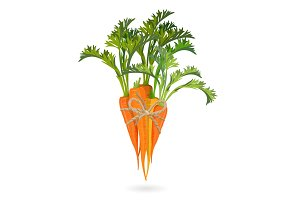 Bunch of carrots bound by rope realistic vector illustration isolated