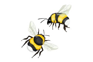 Two bumble bees with wings flying vector illustration isolated